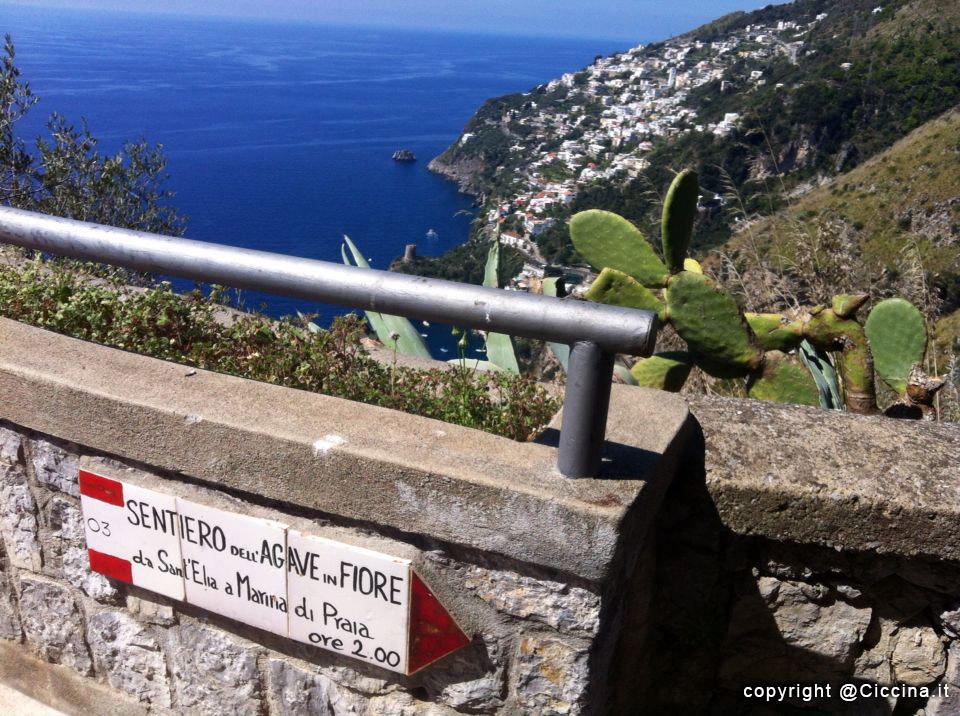 sentiero agave in fiore